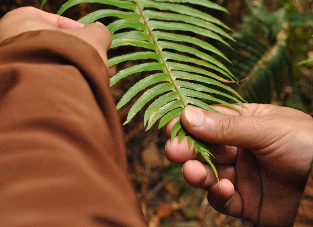 leaf-hands